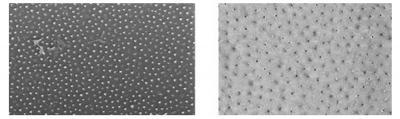 Korean researchers fabricate ordered graphene quantum dot arrays