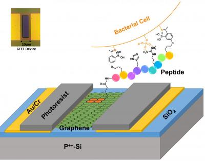 Graphene-based platform could  selectively identify deadly strains of bacteria