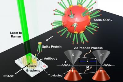 Researchers develop graphene-based sensors that detect COVID-19 quickly and efficiently