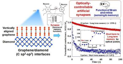 Graphene-diamond junctions could assist in the realization of neuromorphic optical computers simulating human visual memory systems